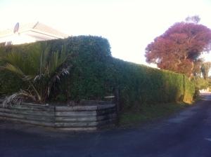 Hedge 2
