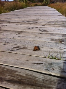 Poo on Boardwalk | On a Jam Hunt