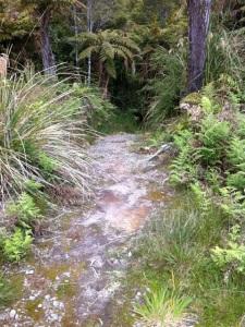 TBC trail