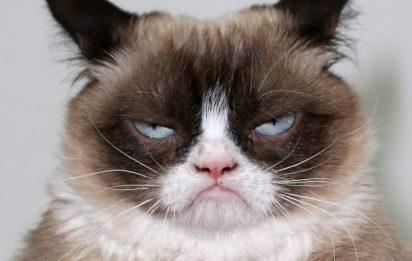 Grumpy-Cat-920x584